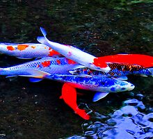 Koi Composition, Byodo-In Temple, Valley of the Temples, Kaneohe, Oahu, HI by Richard VanWart