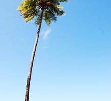 The coconut palm by khadhy