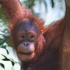 Happy Orang by jonbunston