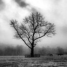 Alone Again by capizzi