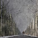 walking into winterland by LarsvandeGoor