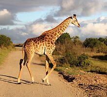 Giraffe by hausofsilva