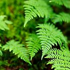Ferns by Stephen Beattie