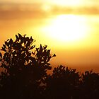 SA Sunset 3 by Clare Kinloch