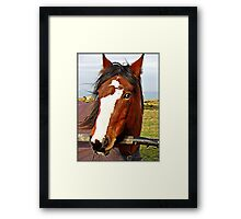This is the little BLIND PONY that is depends of the EYES of the White  Horse. Framed Print