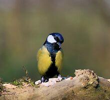 I'm a shy bird by luxnimago