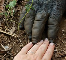 Gorilla Touch by ApeArt