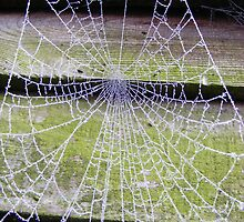 Frosty Cobweb by groovygreen