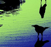 Grackles 1 by gary becker