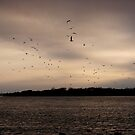 the birds by angelc1