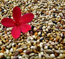 A flower among seeds by Jen Millard