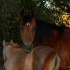 Arabian Mare and Foal by stackerzling