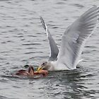"""""""What's for dinner, Mrs. Gull?"""" by David Friederich"""