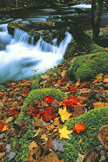 MIDDLE PRONG,AUTUMN by Chuck Wickham