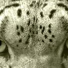 Snow Leopard Eyes by Lisa G. Putman