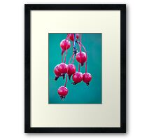 Candy.  Framed Print