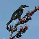 """A Tui Poseing for the Picture"" by mickey"