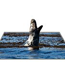 Seal yawning at Portnahaven 3D by Shaun Whiteman