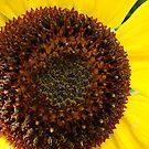 The Sunflower Center by SpiritFox