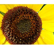 The Sunflower Center Photographic Print