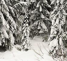 Snowy Trees by Olga Zvereva