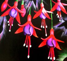 Fuschias by Heidi Windeisen Hinte