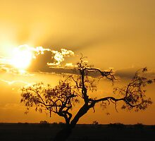 Golden sunset and tree in the outback by Marilyn Baldey
