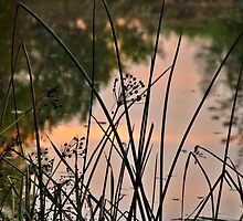 Reed by Carole Brunet