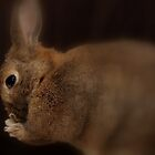 Praying bunny by Arve Bettum