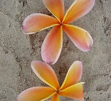 Orange Frangipani Beach Pair-(Portrait) by Martice