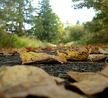 Leafy Road by GPMPhotography