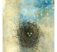 Bird's Nest  Photographic Print