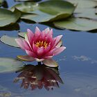 Water lilly by AnnieSnel