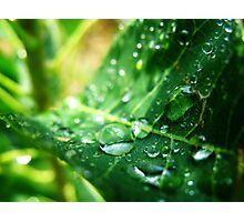 Drip Drop Photographic Print