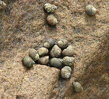 Periwinkle Snails by SpiritFox