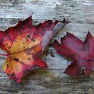 Maple Leaves by SpiritFox