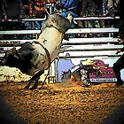 Bull Riding Minus the Rider by Darlene Wilson