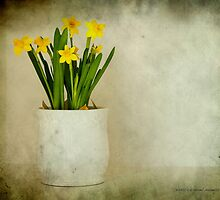 Colloquially Jonquil by Jessica Manelis
