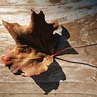 Leaf on Deck by Modified