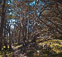 Cypress Grove Trail, Point Lobos, California by MarkEmmerson