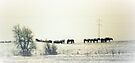 Snow Horses by Leanna Lomanski