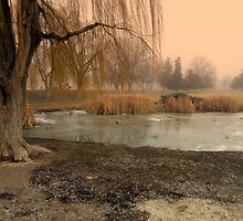 Weeping Willow by Cricket Jones