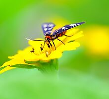 Forage on Flower by Agus Achmadyana