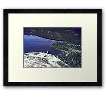 Labrador Summer Framed Print