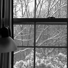 Winter Window by lroof
