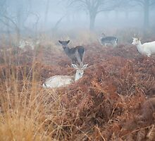 A White Deer in the Mist by DonDavisUK