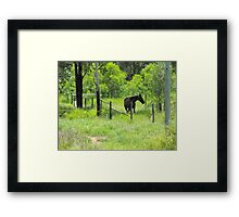 Bluff is a Horse's Paradise  Framed Print