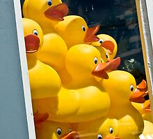Happy Window of Duckies by Yvonne Roberts