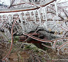 Iced branches after the Storm in Oklahoma 2007 by Ronee van Deemter