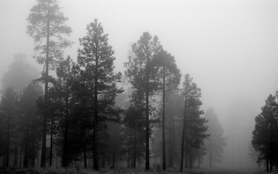 Arizona Fog by B Spencer